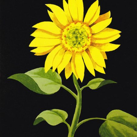 Sunflower 16x20